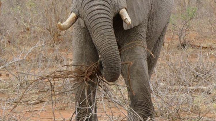 Zululand and Kruger Wildlife